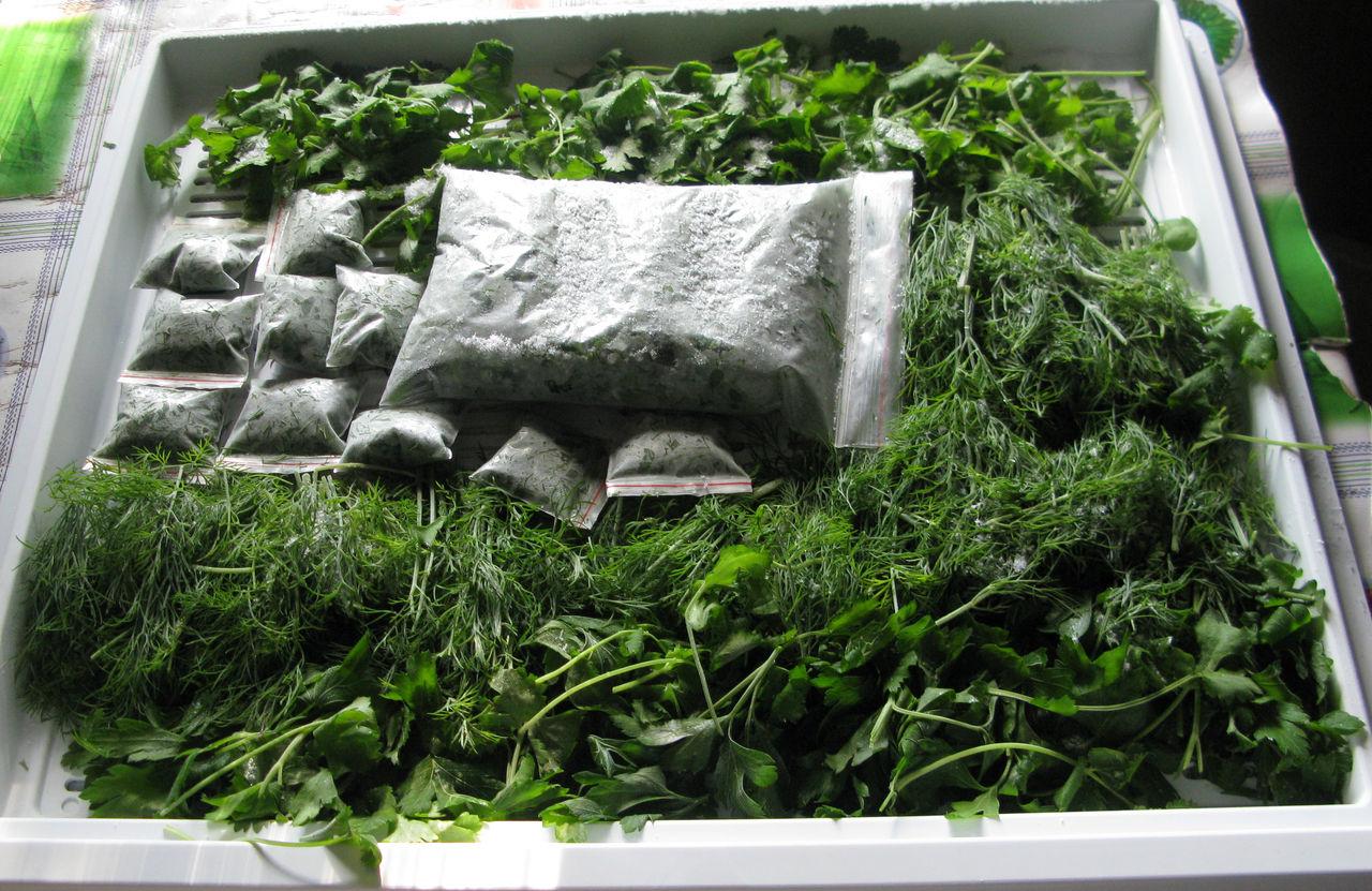 Как сохранить зелень свежей, заготовка зелени и заморозка овощей на зиму